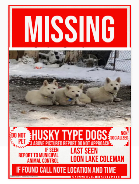 Image of Missing Husky Dogs